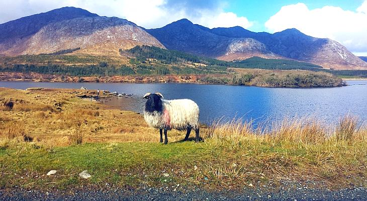 Connemara – Wilde Schönheit von Irland
