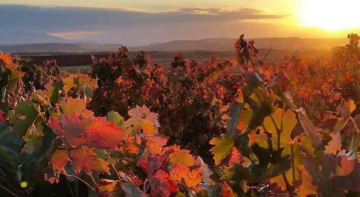 viñedos y vinos de La Rioja